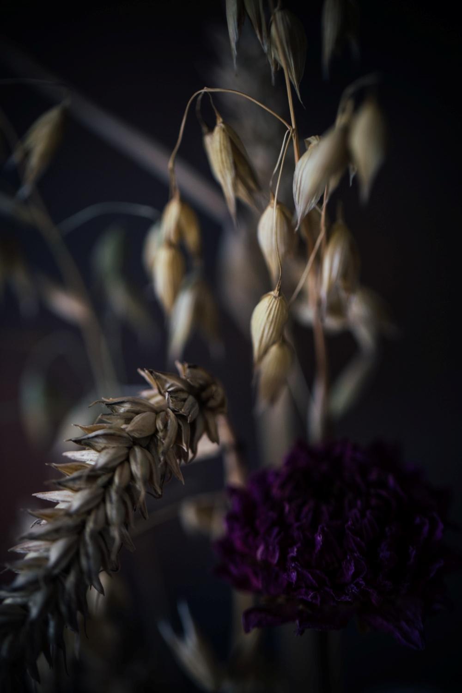 Torte-Herbst-birnenfoodstyling–_42A3348